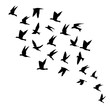 Silhouette of flying birds on white background. Inspirational body flash tattoo ink. Vector.