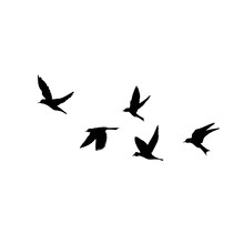 Silhouette Of Flying Birds On ...