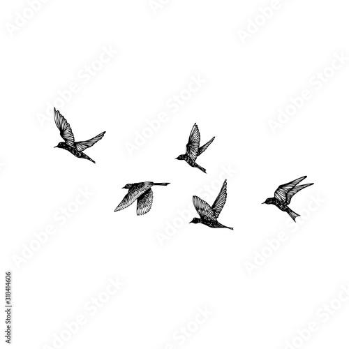Valokuva Set of black hand drawn strokes birds, flock