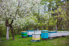 New Hives On Apiary In Spring ...