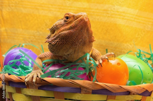 Canvas Print Close-Up Of Bearded Dragon In Basket