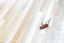 One Creepy Cockroach Dead On F...