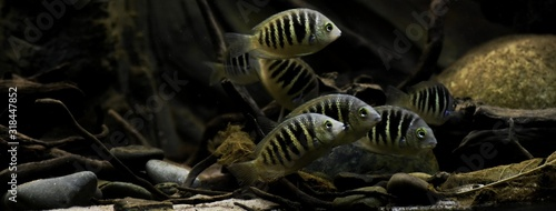 Fotografie, Obraz CLOSE-UP OF FISH SWIMMING IN AQUARIUM