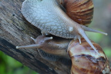 Close-Up Of Snails On Tree