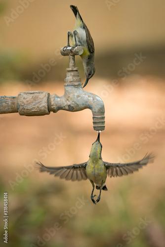 Naklejka premium CLOSE-UP OF TWO HUMMINGBIRDS
