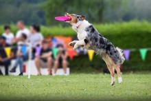 DOG CATCHING FRISBEE