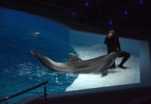 Dolphin Training. The Man And ...