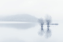 Bare Trees In The Lake At Fogg...