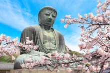 The Great Buddha And Sakura Fl...
