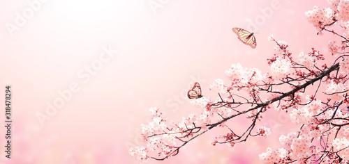 Beautiful magic spring scene with sakura flowers Wallpaper Mural