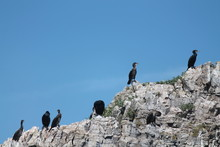 Low Angle View Of Cormorants On Cliff Against Blue Sky