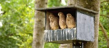 Close-Up Of Kestrels In Birdhouse On Tree