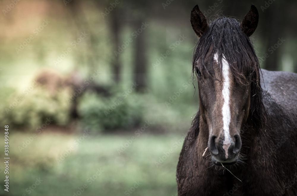Fototapeta Close-Up Of Wet Horse