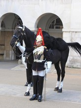 Honor Guard Standing By Horse Against Building