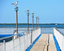 Seagulls Perching On Lighting Equipment At Pier By Sea