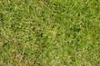 canvas print picture - Grünes Gras