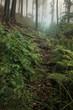 Leinwanddruck Bild green forest natural landscape, lush vegetation in foggy woods