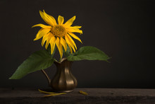 Still Life With A Sunflower In...