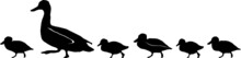 Duck Silhouette With Chicks Ve...
