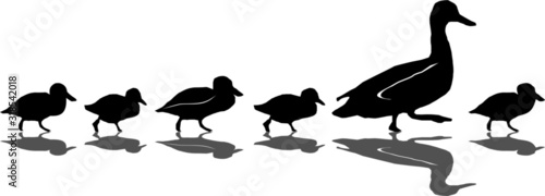 Photo Duck Silhouette with Chicks Vector