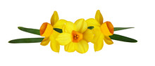 Yellow Narcissus Flowers In A ...