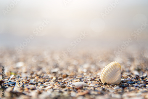 shell ashore in waves of sea in sunset Canvas Print
