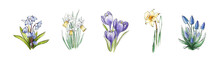 Spring Daffodil, Crocus, Musca...