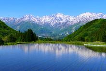 青鬼地区の水田に映る北アルプス、白馬三山。青鬼、白馬、長野、日本。5月下旬