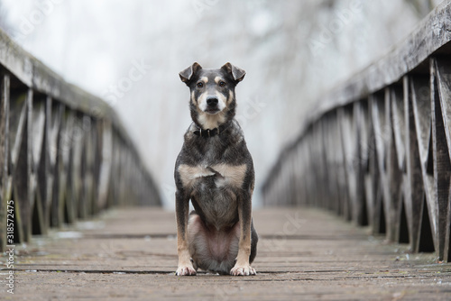 Foto Dog sitting on a wooden bridge