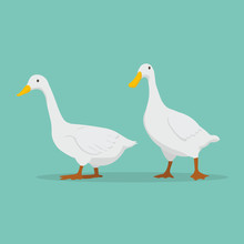 Duck Cartoon Set Vector Illust...