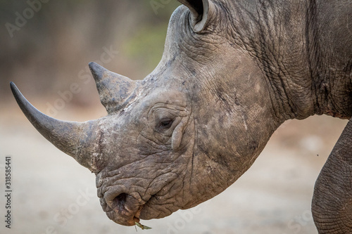 Fotografia Close-Up Of rhinoceros on field at forest