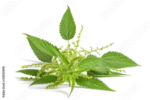 Photo Nettle with flowers