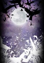 The Birds Of Heaven Silhouette Art Photo Manipulation