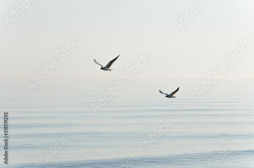 Fotografie, Tablou Birds Flying Over Sea