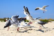 Seagulls At Beach