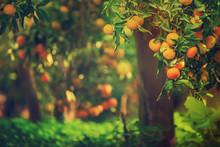 Tangerine Sunny Garden
