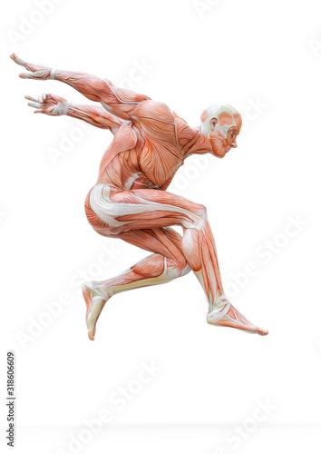 muscleman anatomy heroic body jumping in white background Fototapet