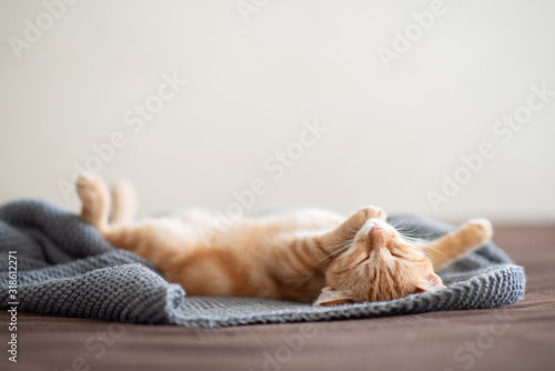 Cute red kitten with classic marble pattern sleeps on the back on sofa Poster Mural XXL
