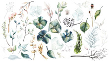 Watercolor Painted Floral Set Of Dried Flowers, Hydrangea, Leaves, Fern, Branches, Eucalyptus Etc. Isolated On White Background.