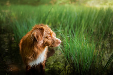 Dog By The Swamp. Walk With Pe...