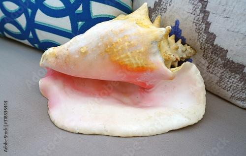 Fotografija A decorative pink conch shell