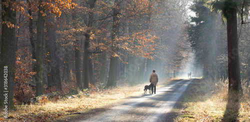 Panorama in the autumnal, colorful forest with backlighting as well as strollers Canvas Print