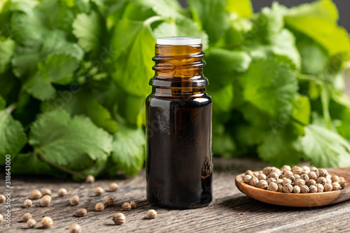 Fototapeta A bottle of essential oil with coriander seeds and cilantro leaves obraz