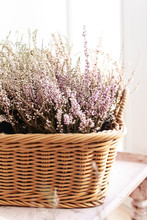 A Bouquet Of Purple Heather An...