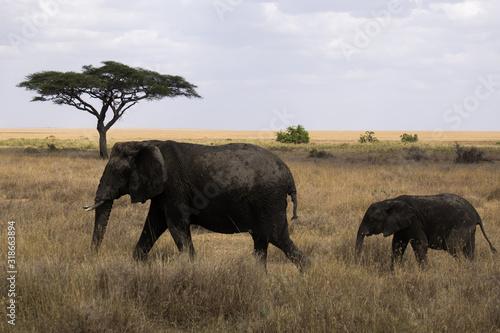 Foto Elephants Walking On Field Against Sky