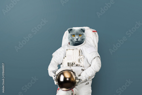Fototapeta Funny cat astronaut in a space suit with a helmet on a gray background