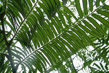 Low Angle View Of Fern Leaves ...