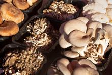 Variety Of Fresh Mushrooms At ...