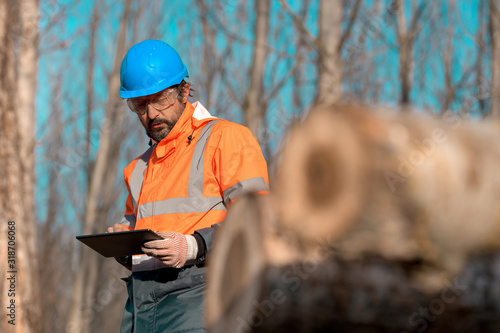 Cuadros en Lienzo Forestry technician using digital tablet computer in forest