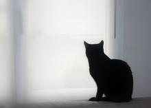 Chat Noir De Dos Regardant Par...